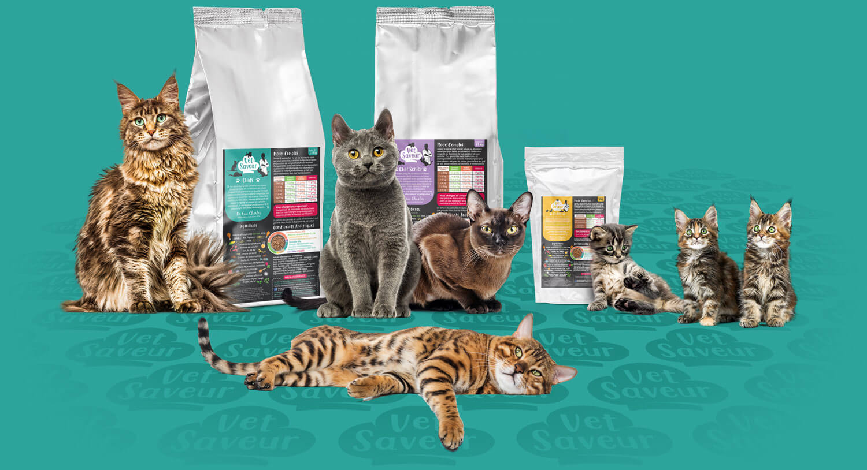 croquettes chats vétérinaire